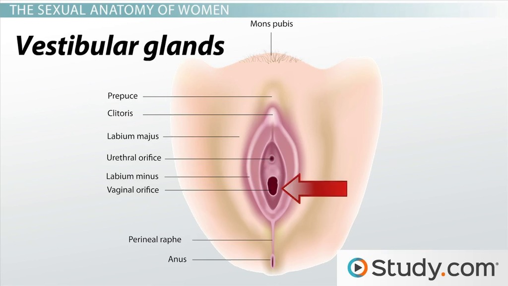 Vagina and of urthra diagram