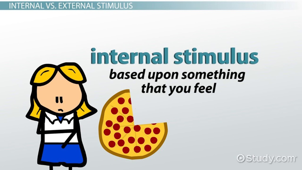 Internal Stimulus Definition Amp Explanation Video
