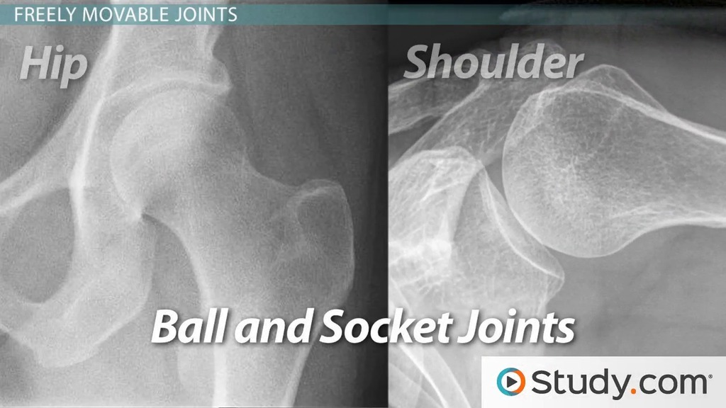Joints Where Bones Connect And Move Video Lesson Transcript