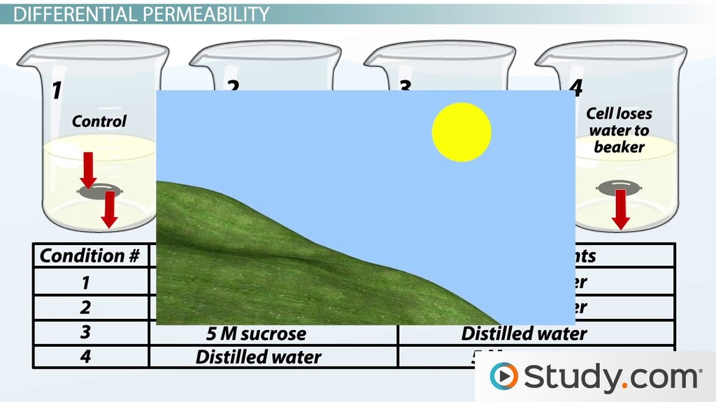 osmosis diffusion essay Many biology and botany textbooks, and online resources, say yes that  osmosis is the special case of diffusion involving water molecules, as as solvent.
