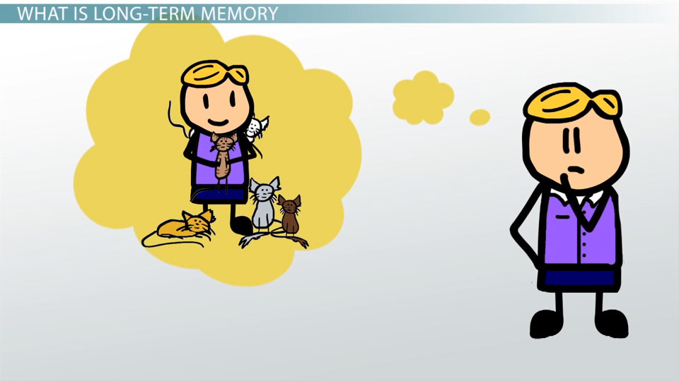 Short Term And Long Term Memory : Long term memory definition types examples video
