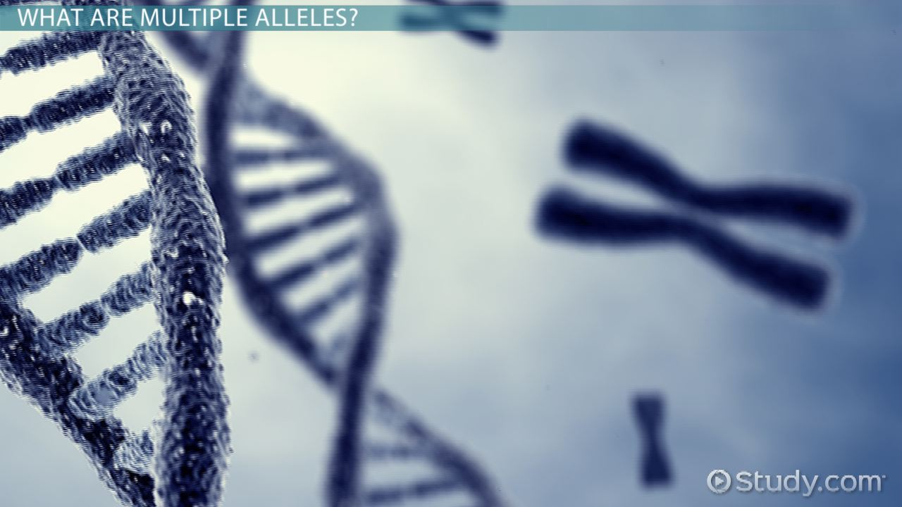 Multiple Alleles: Definition & Example - Video & Lesson ...