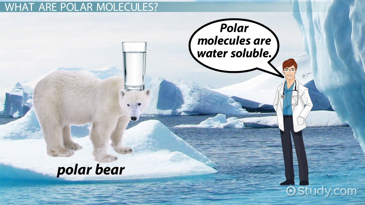 polar molecule  definition  u0026 examples
