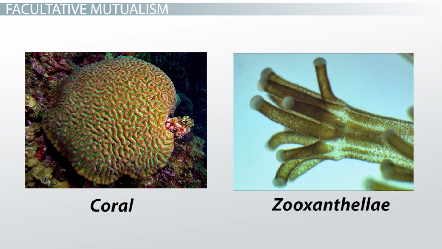Mutualistic Relationships Examples Types Video