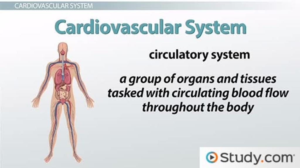 The Aging Circulatory And Respiratory Systems Videos Lessons