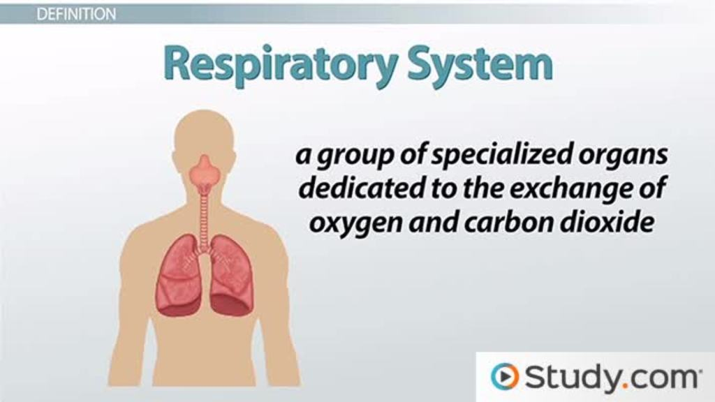 structural & functional changes of the respiratory system due to, Human Body