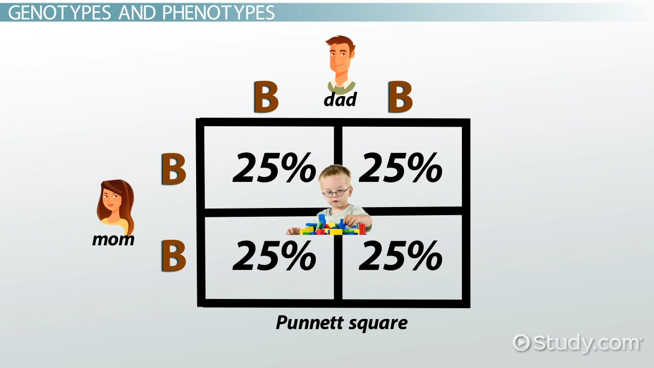 Image result for punnett square