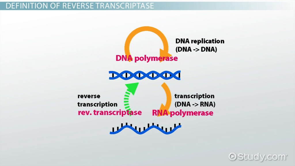 ap bio dna essays Ap biology essay questions dna replication try our free ap biology practice test these ap biology multiple choice questions are a great way to prepare for your ap.