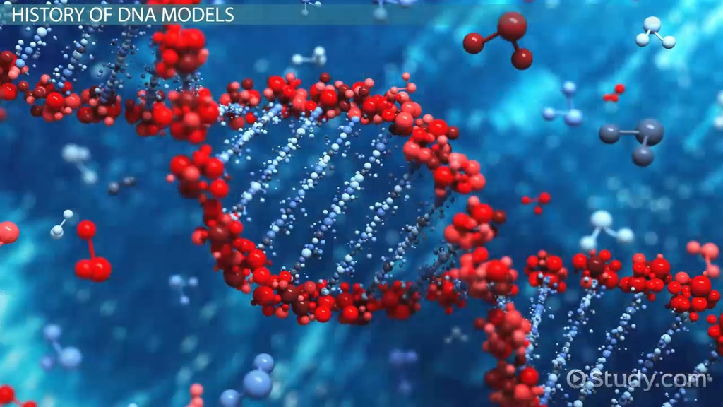 Watson crick model of dna video lesson transcript study malvernweather Choice Image
