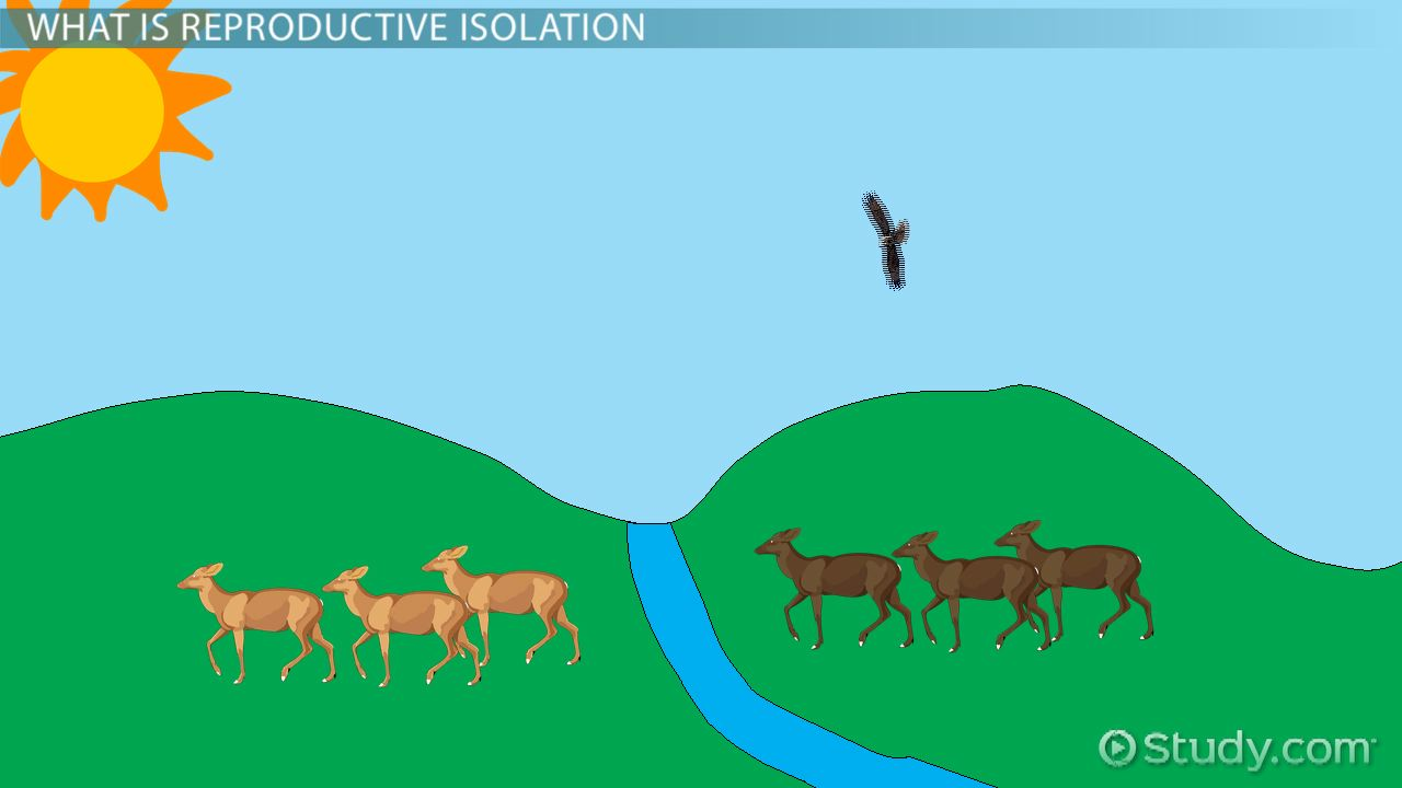 Reproductive Isolation Definition Types Examples on High School Ecology Test
