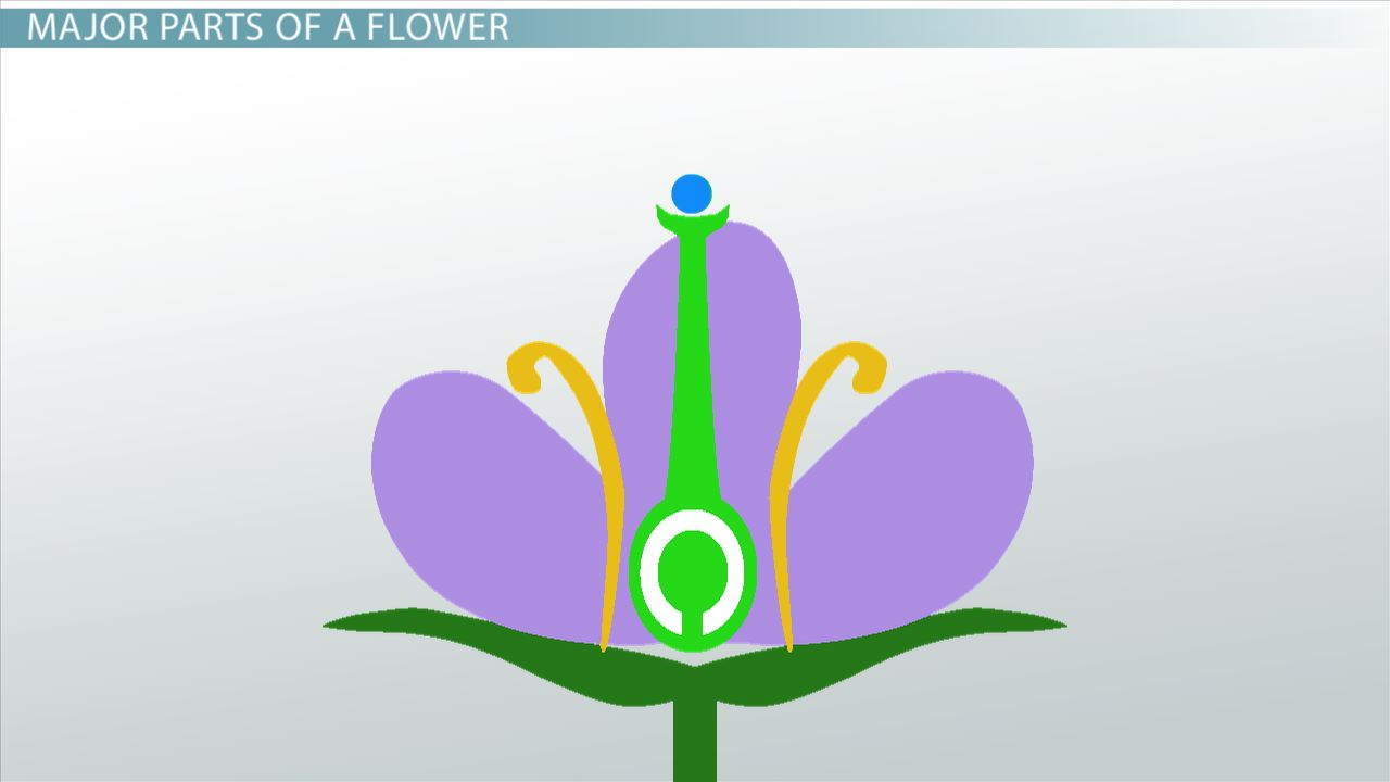 flowers structure and function of male u0026 female components