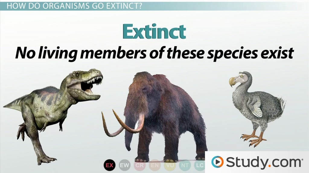 differences between endangered species and threatened species  differences between endangered species and threatened species video lesson transcript com