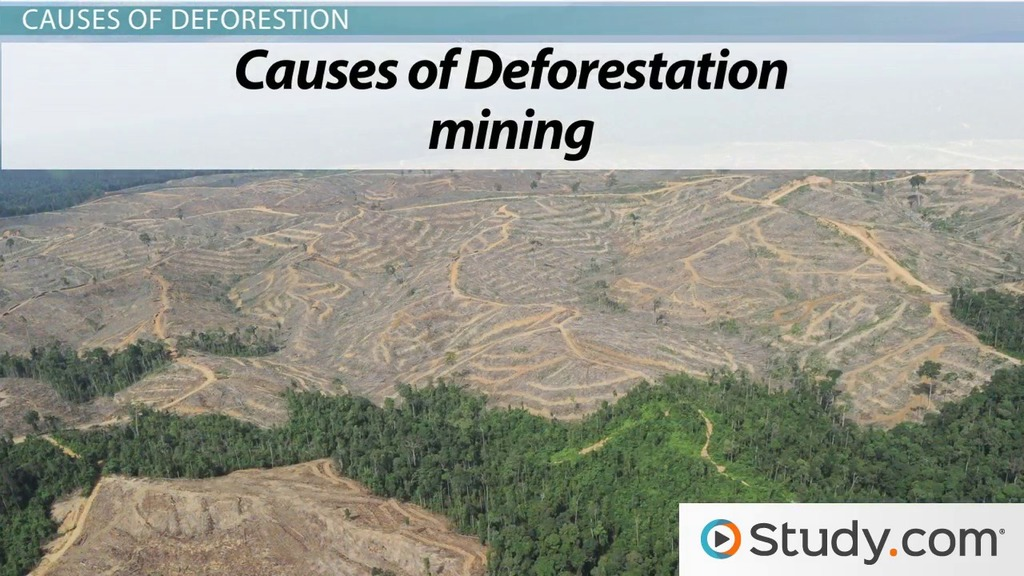 deforestation as a global issue essay