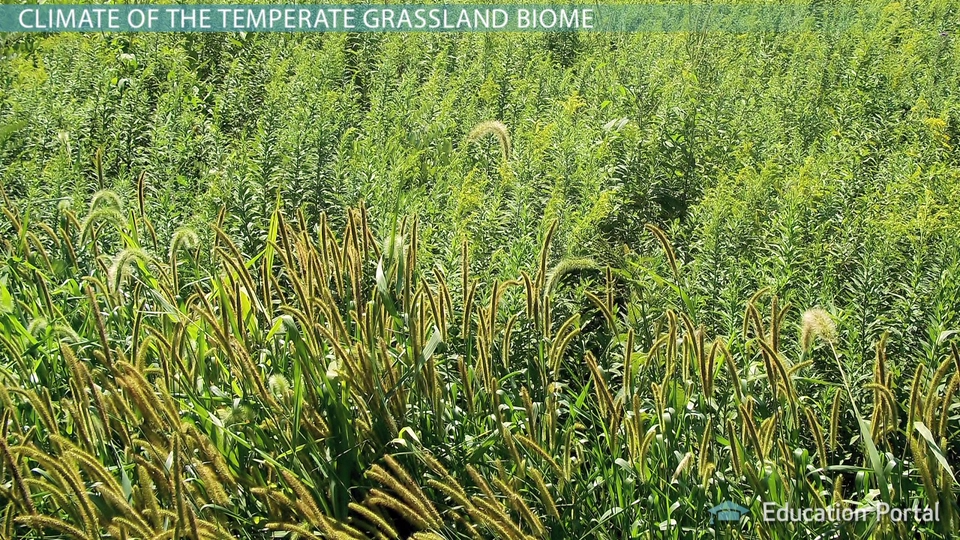 temperate grassland biome climate plants animals