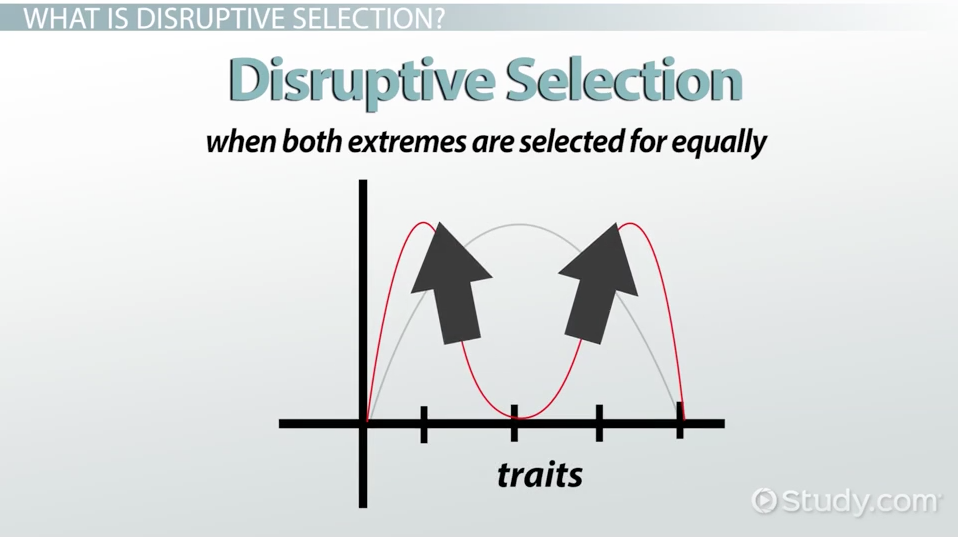 disruptive selection  example  definition  u0026 graph