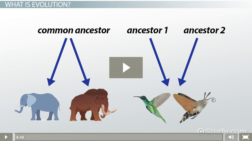 divergent  u0026 convergent evolution  definitions  u0026 examples