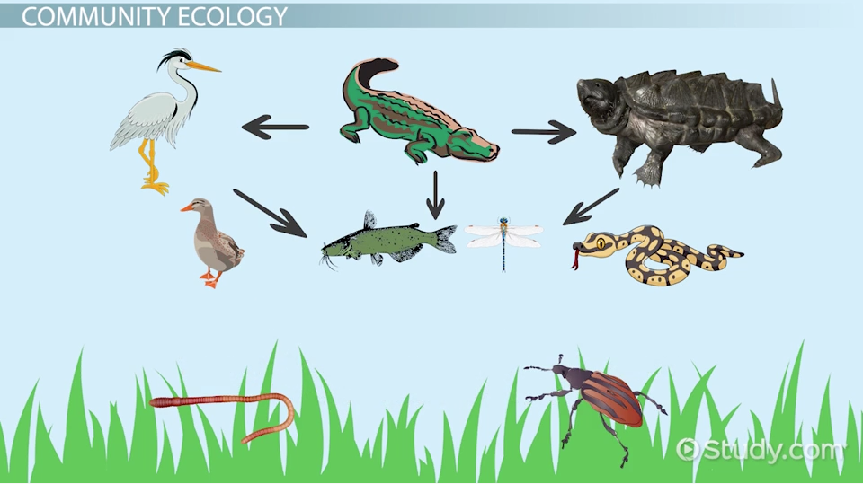 a study of ecology Ecology majors study the web of living and nonliving things in an environment to understand how the whole system works.