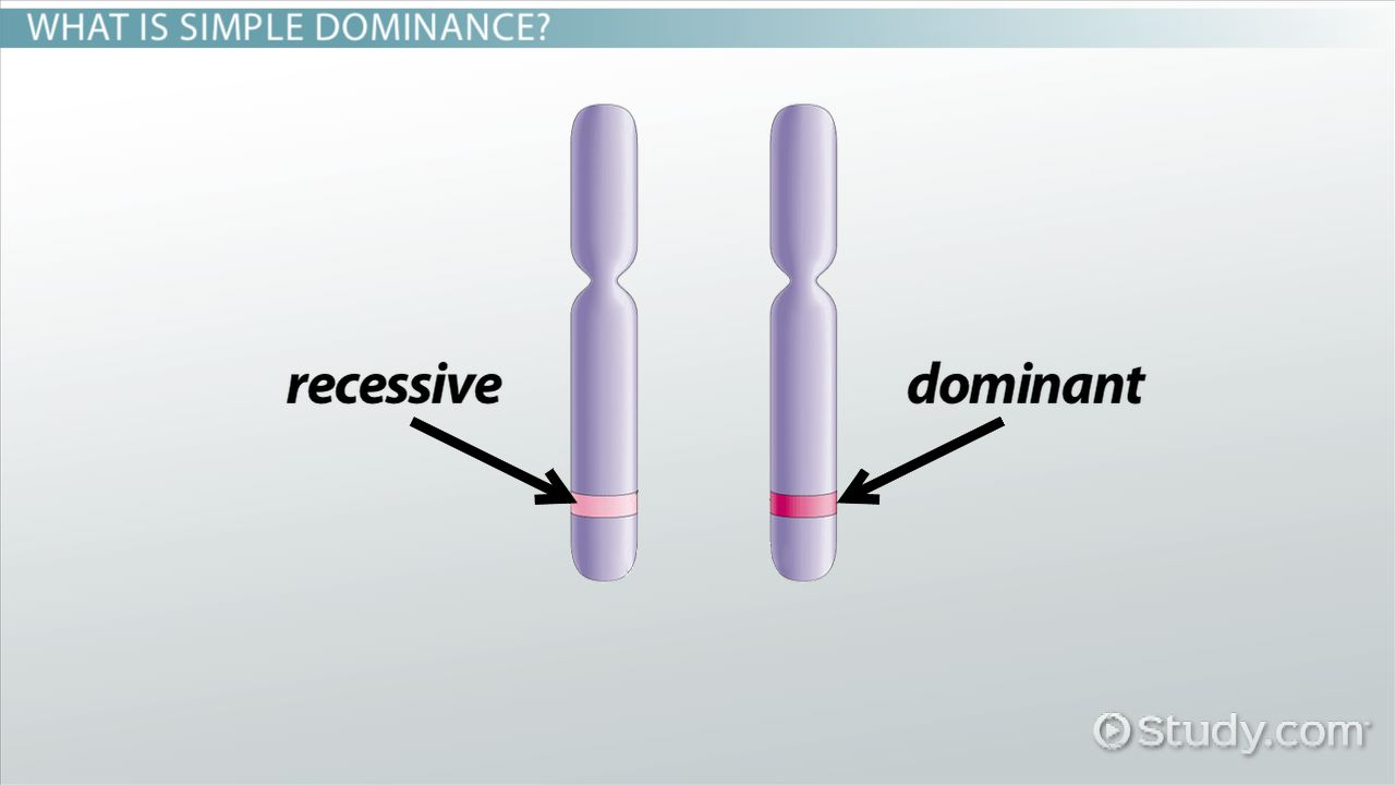 simple dominance  definition  u0026 concept
