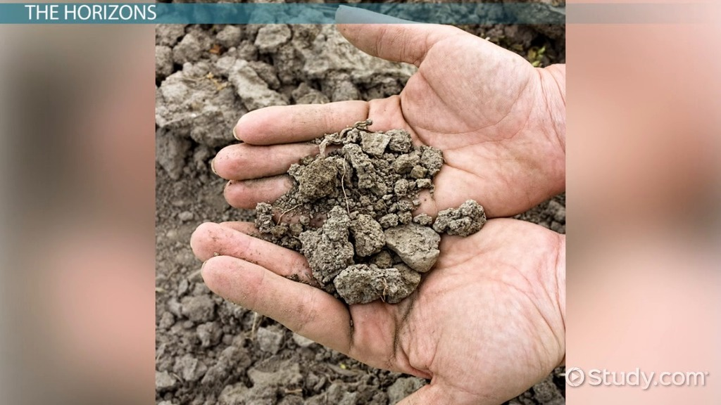 Soil profile definition development types video for Soil definition science