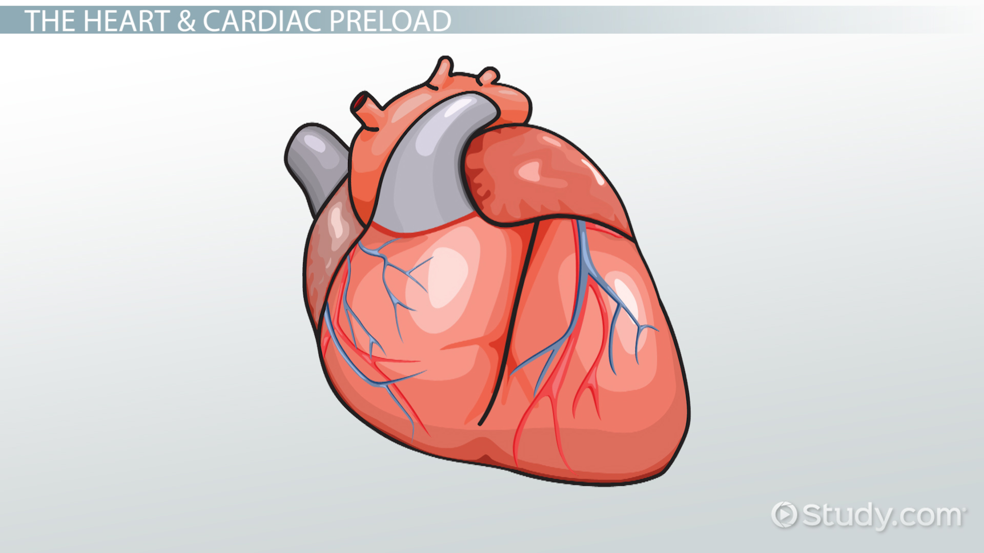 Cardiac Preload Definition Amp Reduction Video Amp Lesson