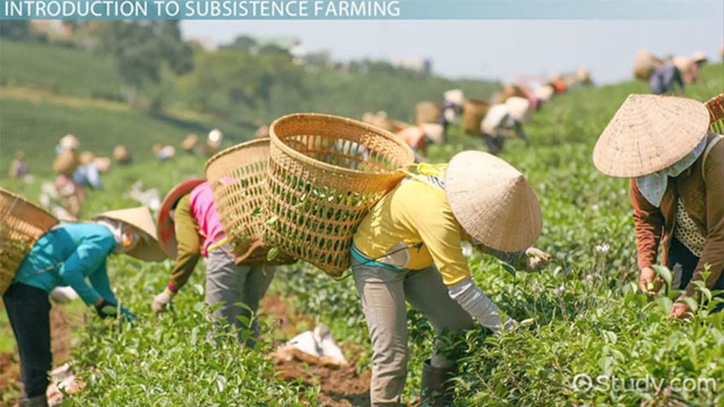 Subsistence Farming: Definition & Examples - Video ...