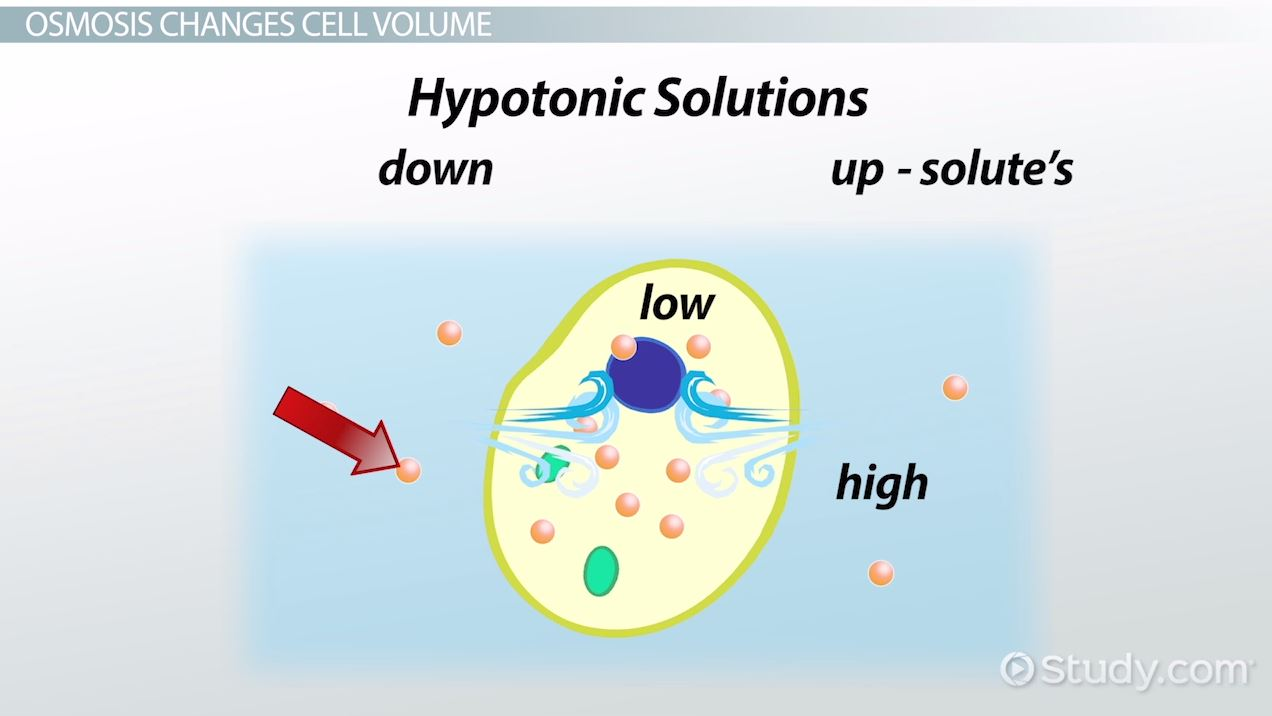 Osmosis: Definition & Examples - Video & Lesson Transcript ...
