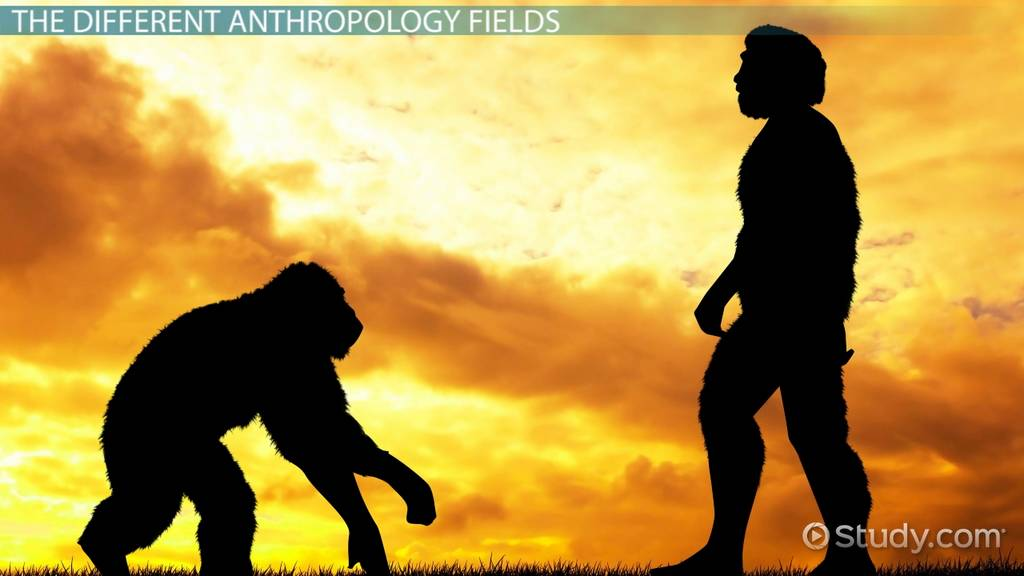 Anthropology | Define Anthropology at Dictionary.com