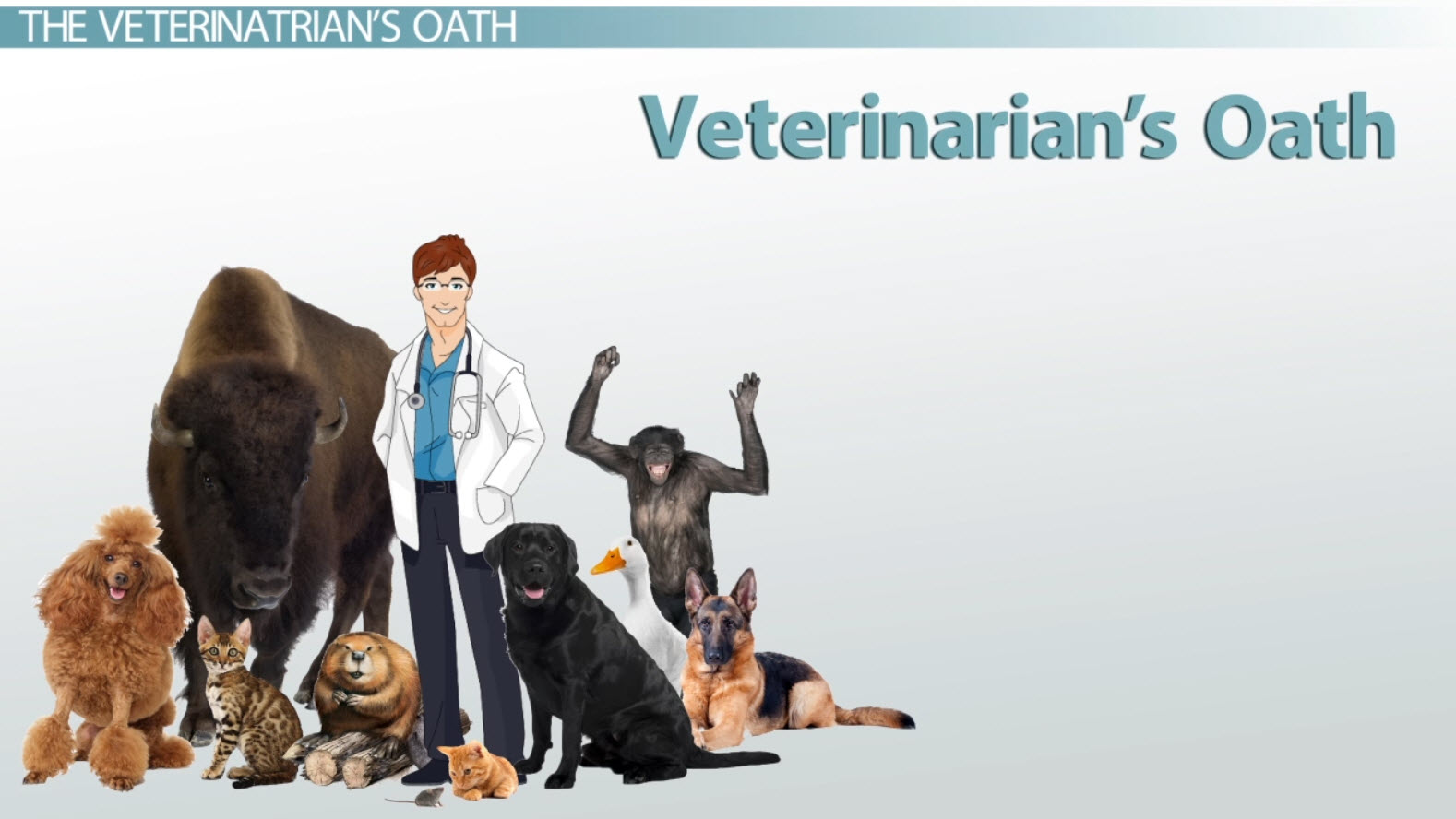 the veterinarian u0026 39 s oath