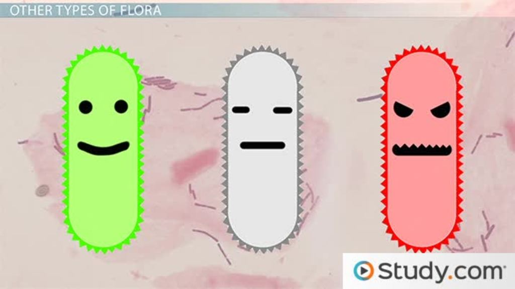 Preventing disease normal human flora video lesson for Flore definition