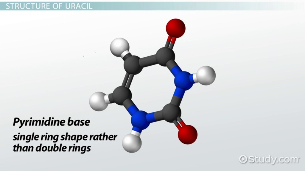 Uracil  Definition  U0026 Structure