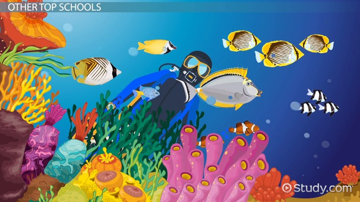 best marine science and marine biology programs  list of