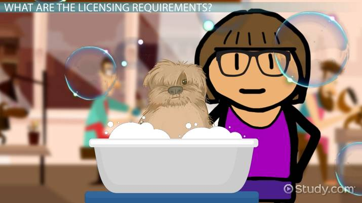 Professional Pet Grooming License And Certification Information