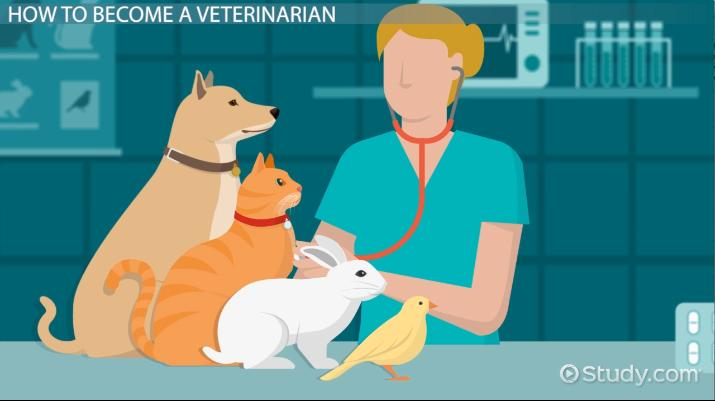 How To Become A Veterinarian Education And Career Roadmap