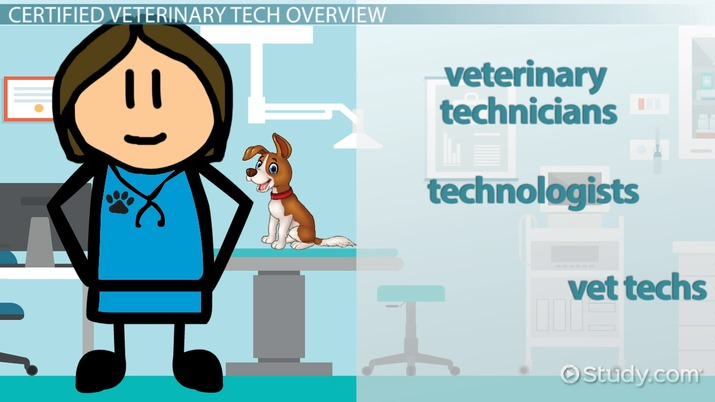 be a certified veterinary tech: education and licensure information