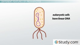 Eukaryotic and Prokaryotic Cells: Similarities and Differences