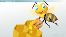 Life Cycle of a Bee: Lesson for Kids preview