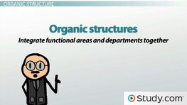 Mechanistic & Organic Organizational Business Structures