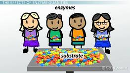 Effect of Enzyme Concentration on Enzyme Activity