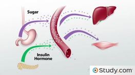 Endocrine System Function & Hormone Regulation