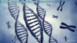 Biological Fitness: Definition & Concept