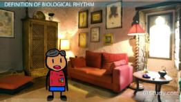 Biological Rhythm: Definition & Explanation
