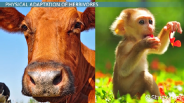 What Are Herbivores? - Examples & Definition