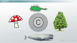 Six Elements Common to Biological Organisms