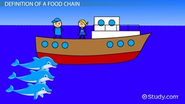 The  Food Chain of a Dolphin