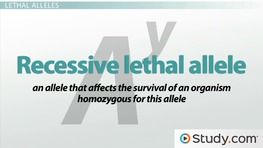 Lethal Alleles: Definition & Examples