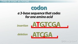 Point Mutations in DNA: Types, Diseases & Examples