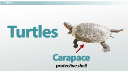 Reptiles: Features, Types & Importance