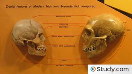 The Human Fossil Record & Human Evolution