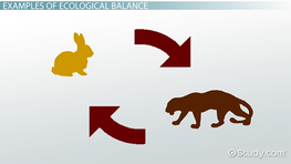 What Is Ecological Balance? - Definition & Importance