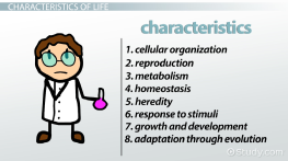 8 Characteristics of Life in Biology